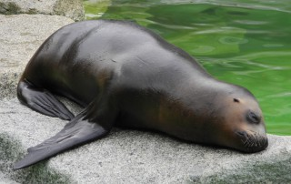 lazy_seal